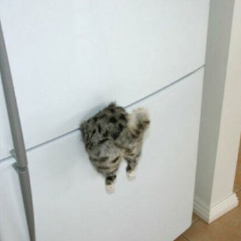 "Магнит ""Застрявший кот"""