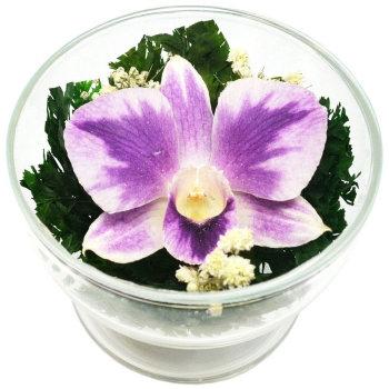 Орхидея в стекле CuSO1 (8 см)