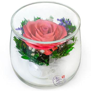 Роза в стекле SSRp (7 см)